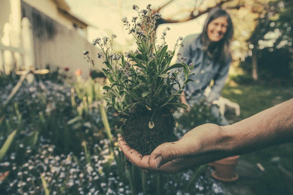 Découvrez des conseils et astuces pour devenir un jardinier accompli