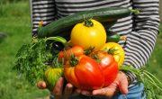 Découvrez les 4 saisons du jardin bio pour faire de belles récoltes