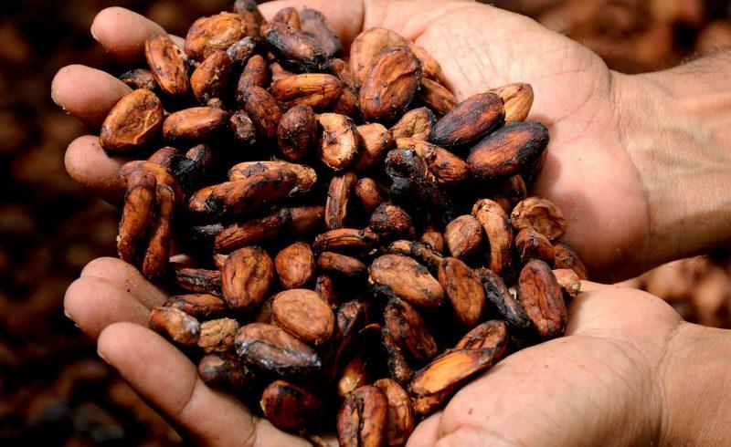 Une enquête complète sur le chocolat bio équitable permet de comprendre l'ensemble de la démarche