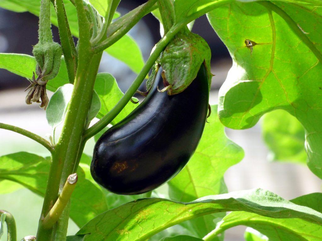 Posséder son propre potager permet de déguster de délicieux légumes