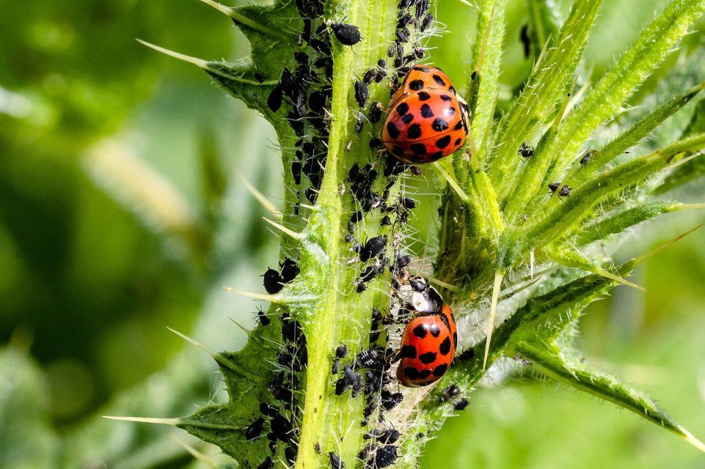 La permaculture enseigne que la nature possède les propres moyens de se défendre