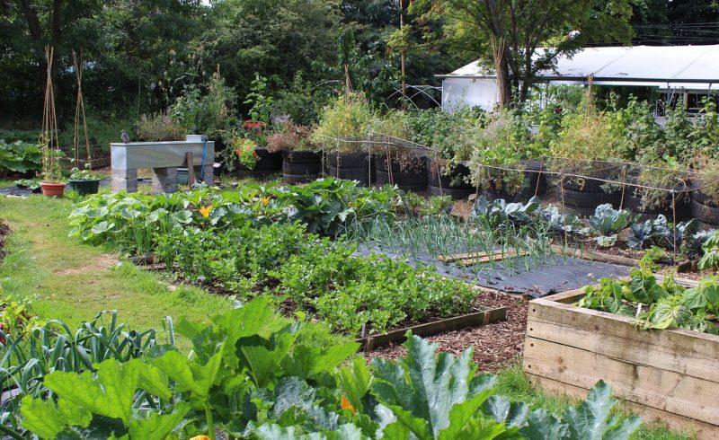 Découvrez la permaculture pour exploiter la terre d'une toute nouvelle façon