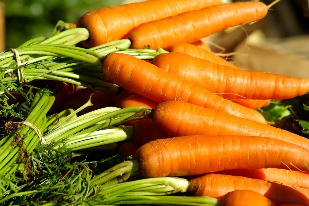 Les carottes sont facils à cultiver dans son potager